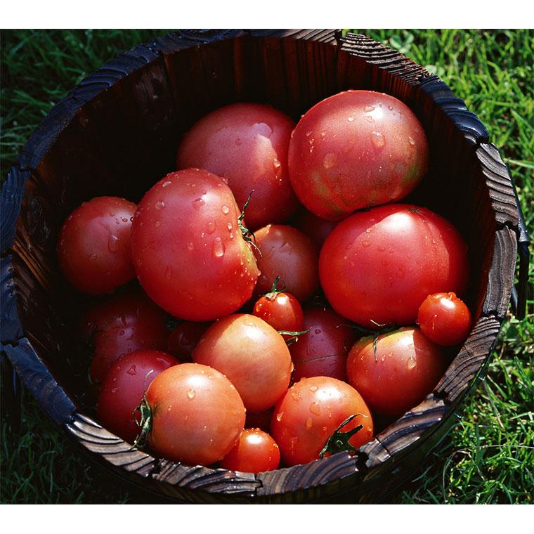 びらとりトマト