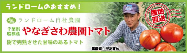 20210414_やなぎさわ農園トマト_バナー